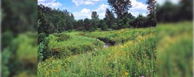 Calcerous Fen in Wisconsin